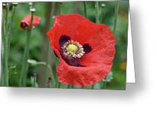 Red Poppy Getting All The Attention Greeting Card