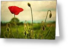 Red Poppy Greeting Card by Violet Gray