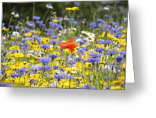 One Red Poppy Amongst The Wildflowers Greeting Card
