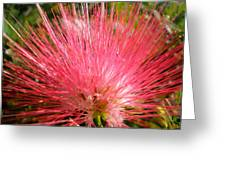 Red Powder Puff Tropical Flower Greeting Card