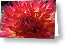 Red Purple Dahlia Flower Summer Dahlia Garden Baslee Troutman Greeting Card
