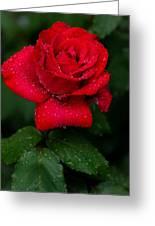 Red Rain 2 Greeting Card