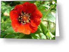 Red Red Bloom Greeting Card