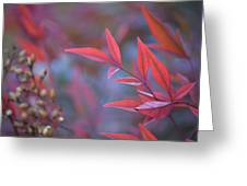Red Red Leaves Greeting Card