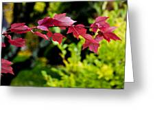 Red Red Maple Leaves Greeting Card