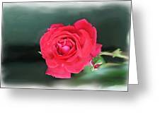Red-red Rose. Greeting Card