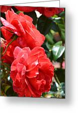 Red Red Roses Greeting Card