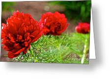 Red Remembrance Greeting Card