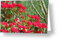 Red Rhododendron Garden Art Prints Rhodies Landscape Baslee Troutman Greeting Card