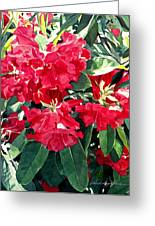 Red Rhododendrons Of Dundarave Greeting Card by David Lloyd Glover