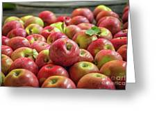 Red Ripe Apples Greeting Card