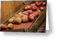 Red Ripe Macintosh Apples Greeting Card