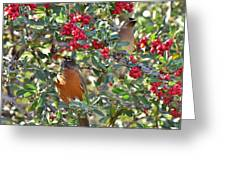 Red Robin And Cedar Waxwing 1 Greeting Card