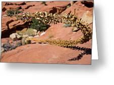 Red Rock Canyon Nv 11 Greeting Card