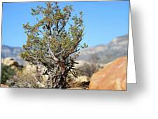 Red Rock Canyon Nv 4 Greeting Card