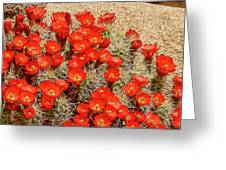 Red Rock Flowers Greeting Card