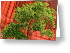 Red Rock Green Tree Greeting Card