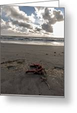 Red Rope On The Beach Greeting Card
