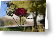 Red Rose 1 Greeting Card