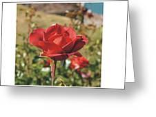 Red Rose 1 Greeting Card