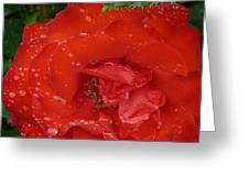 Red Rose After Rain Greeting Card