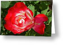 Red Rose And A Sidecar At Pilgrim Place In Claremont-california Greeting Card