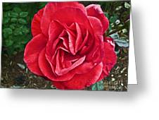 Red Rose F135 Greeting Card
