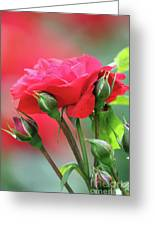 Red Rose Flower Greeting Card