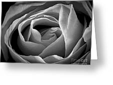 Red Rose In Infrared Greeting Card