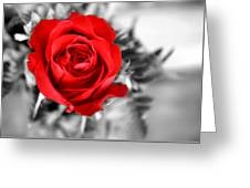 Red Rose Greeting Card by Karen M Scovill