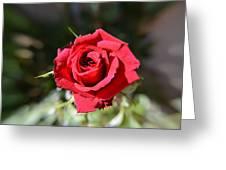 Red Rose Landscape Greeting Card