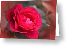 Red Rose Of May Greeting Card