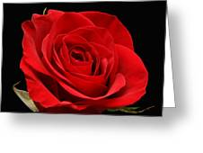 Red Rose On Black 1 Greeting Card