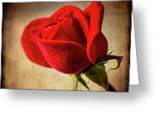 Red Rose Romance Greeting Card