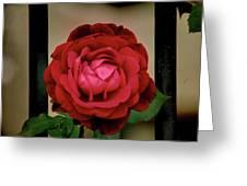 Red Rose  V2 Greeting Card