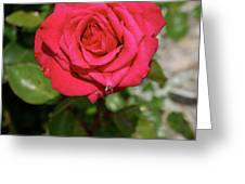 Red Rose With Droplet Greeting Card