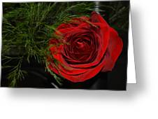 Red Rose With Garnish And Black Velvet Greeting Card