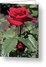 Red Rose With Stem Greeting Card