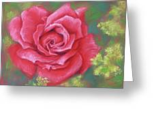 Red Rose With Yellow Lady's Mantle Greeting Card