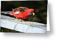 Red Rosella Greeting Card