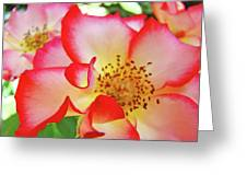 Red Roses White Yellow Rose Flower Floral Art Print Baslee Troutman Greeting Card