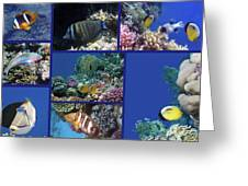 Red Sea Collage Greeting Card