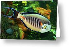 Red Sea Fish Greeting Card