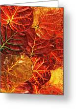 Red Sea Grapes By Sharon Cummings Greeting Card