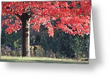 Red Shade Tree Greeting Card