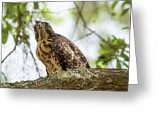 Red Shoulder Hawk Greeting Card