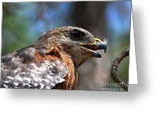 Red Shouldered Hawk - Profile Greeting Card