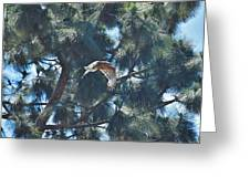 Red Shouldered Hawk Flying Away 1 Greeting Card