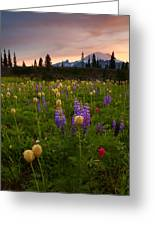 Red Sky Meadow Greeting Card