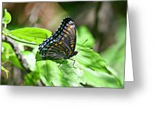 Red-spotted Purple 4172 Greeting Card